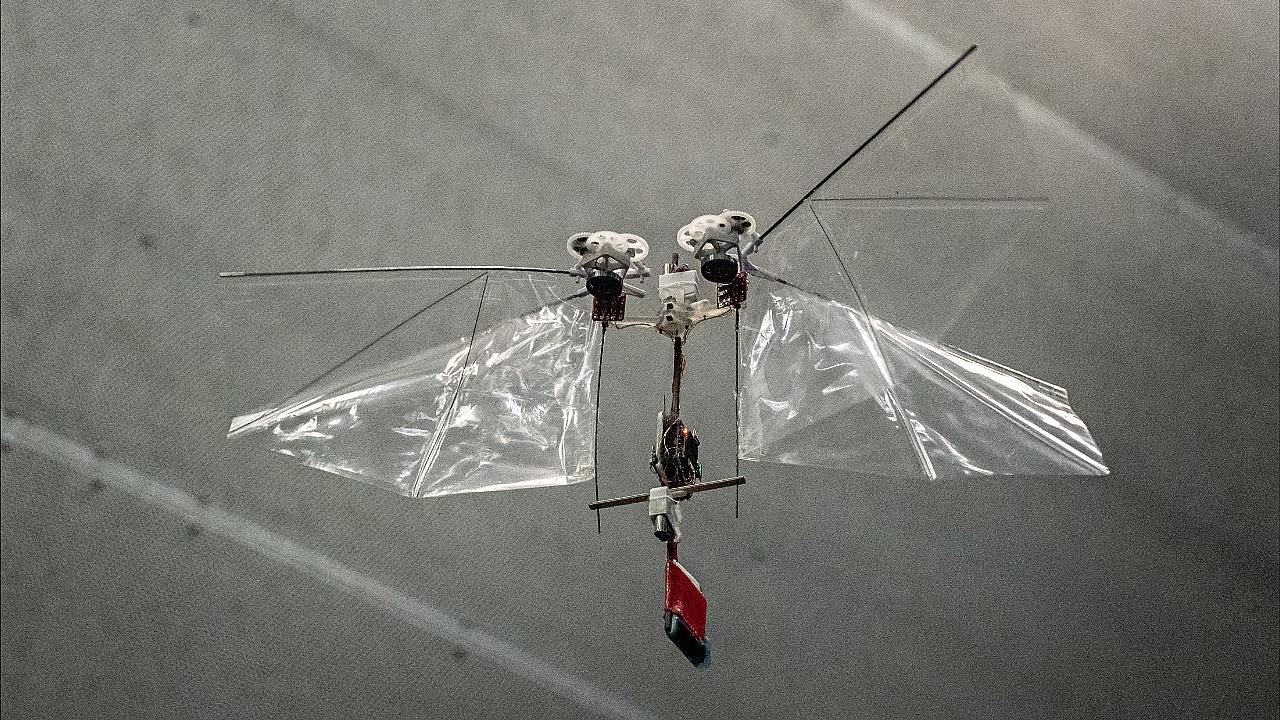 В Нидерландах создают дрон-муху