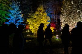 Ботанический сад Берлина окунулся в рождественскую иллюминацию