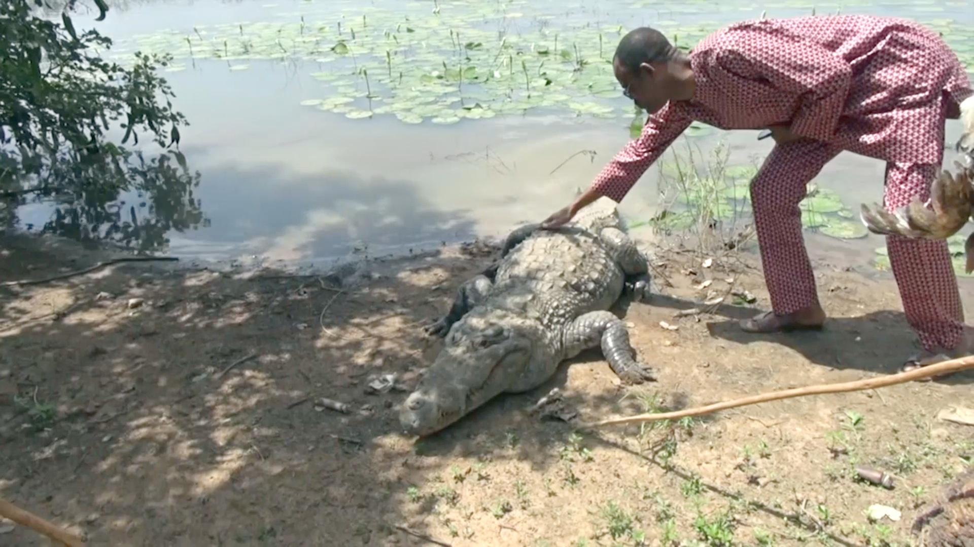 Крокодилы и люди живут дружно в африканской деревне