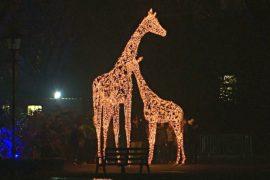 В Лондонском зоопарке появились светящееся скульптуры животных