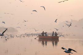 В Индии любуются чайками, прилетевшими на зимовку