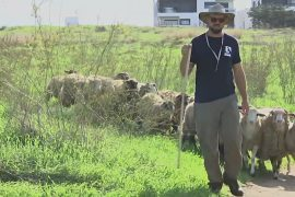 Парк Тель-Авива нанял пастуха для борьбы с сорняками