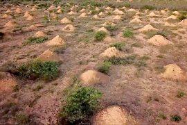Кто построил миллионы таинственных холмов на северо-востоке Бразилии