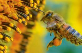 Экологические новинки 2018 года: от убежищ для пчёл до городских очистителей воздуха