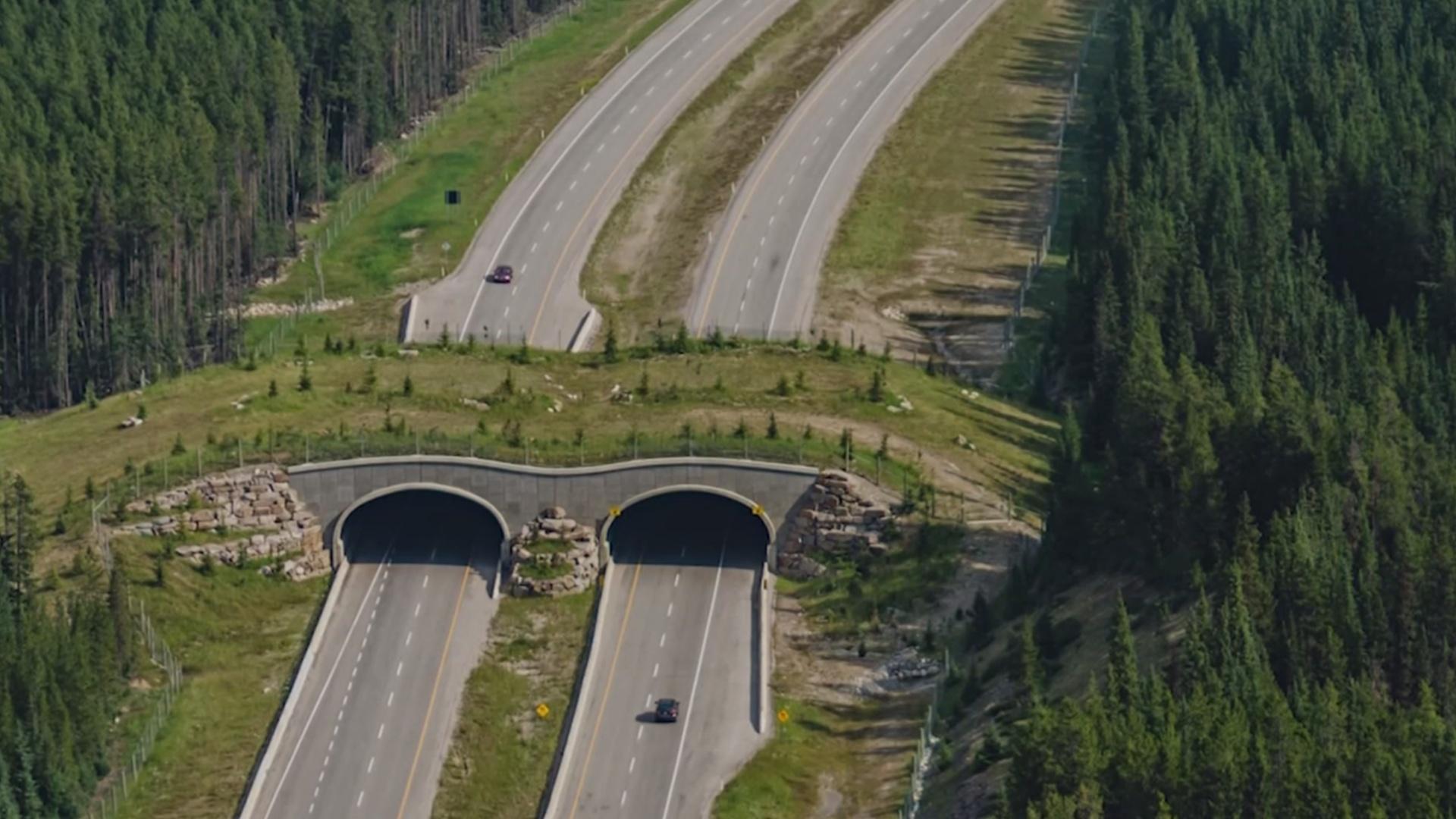 Над трассами в США возводят мосты для животных