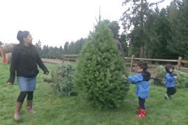 В США продвигают Рождество и Новый год с живыми ёлками