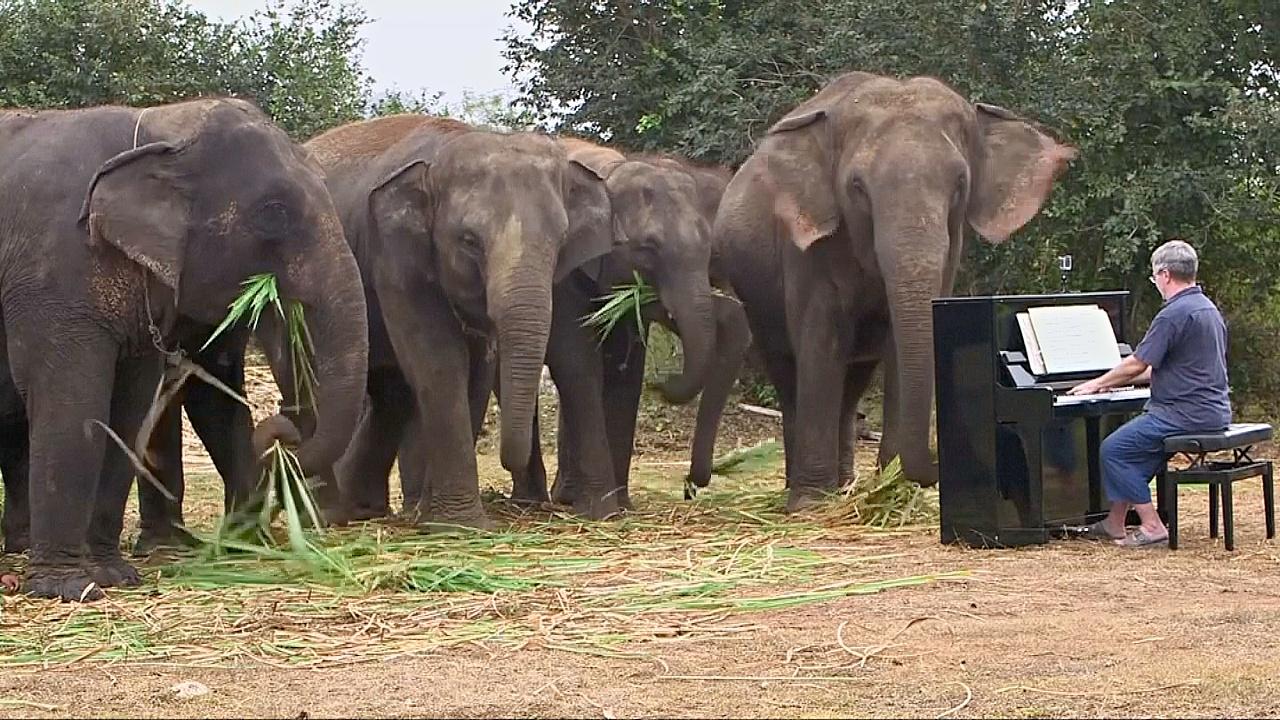В Таиланде пожилых слонов ублажают классической музыкой
