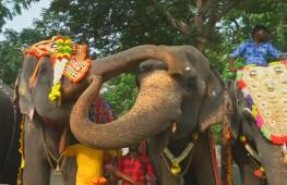 Храмовые слоны Индии отправились на спа-курорт