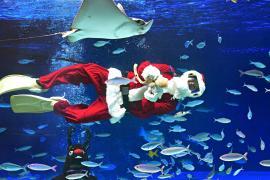 Санта-Клаус среди рыбы: в Токийский аквариум пришёл праздник