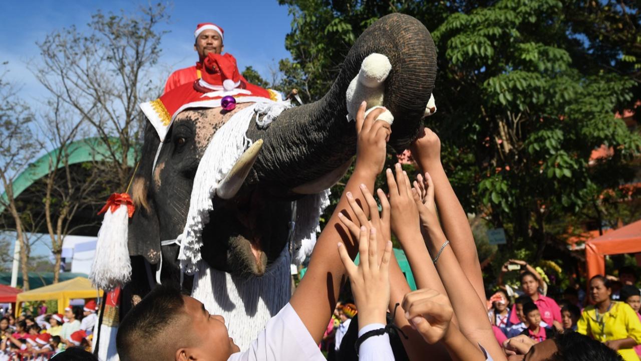 Тайским детям рождественские подарки раздали слоны