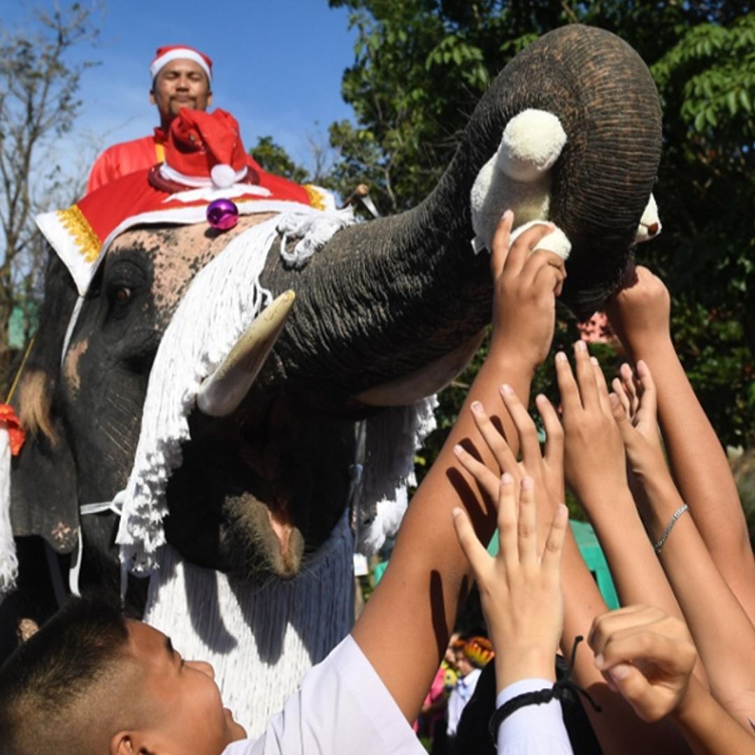 К тайским детям Санта-Клаус приехал на слоне