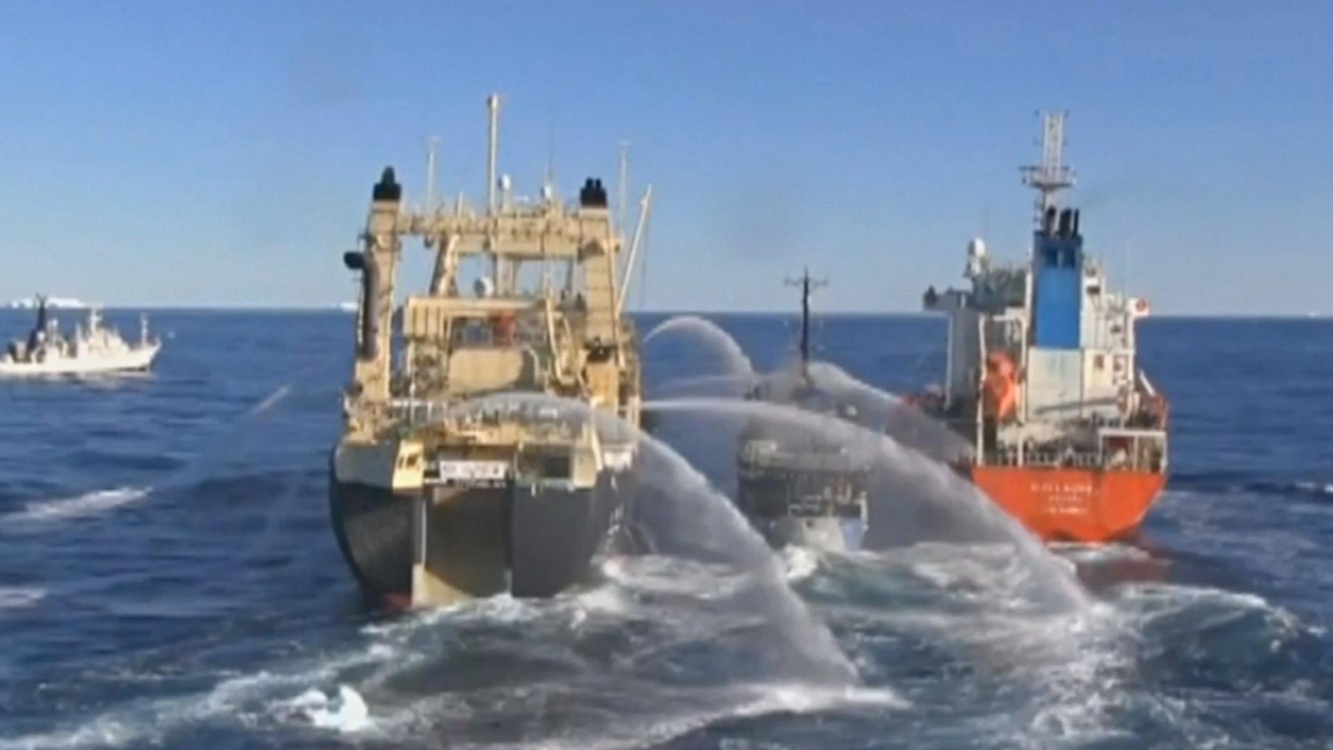 Япония возобновит коммерческий китобойный промысел с июля 2019