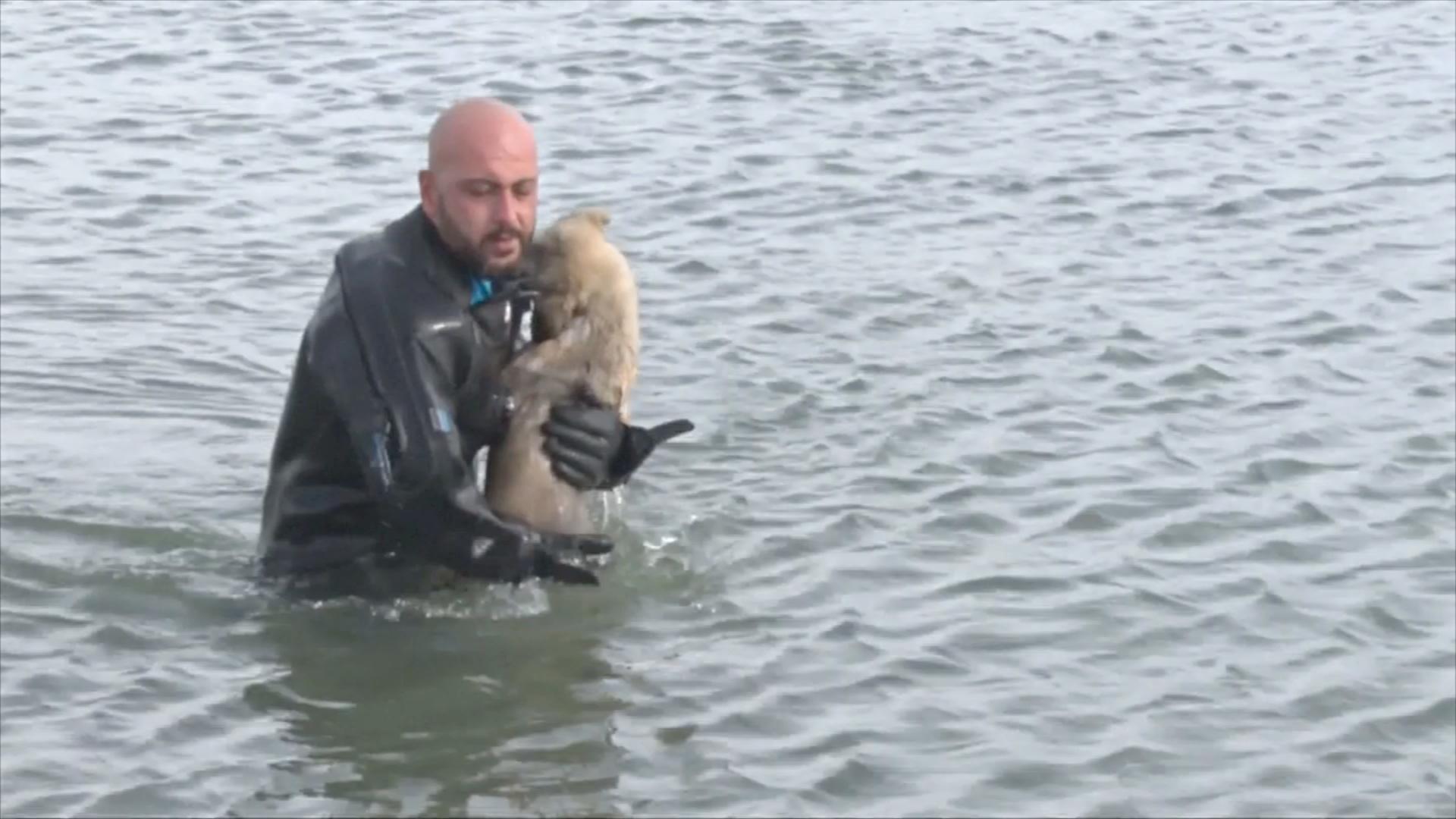 В Турции полицейский-водолаз спас щенка на замёрзшем озере