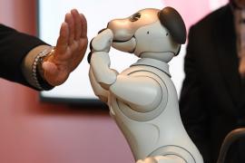 Как продвинулась робототехника в 2018