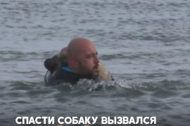 Как на замёрзшем озере в Турции спасали щенка