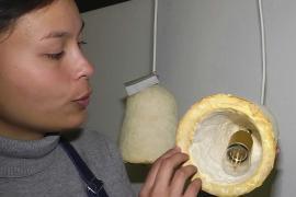 Абажуры из грибов создают в Бельгии