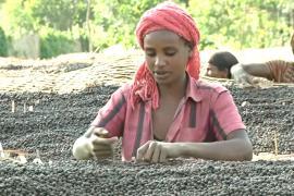 Эфиопские фермеры получают за чашку кофе менее цента