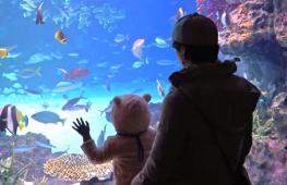 Прикоснуться к глубоководным созданиям можно в океанариуме в Токио