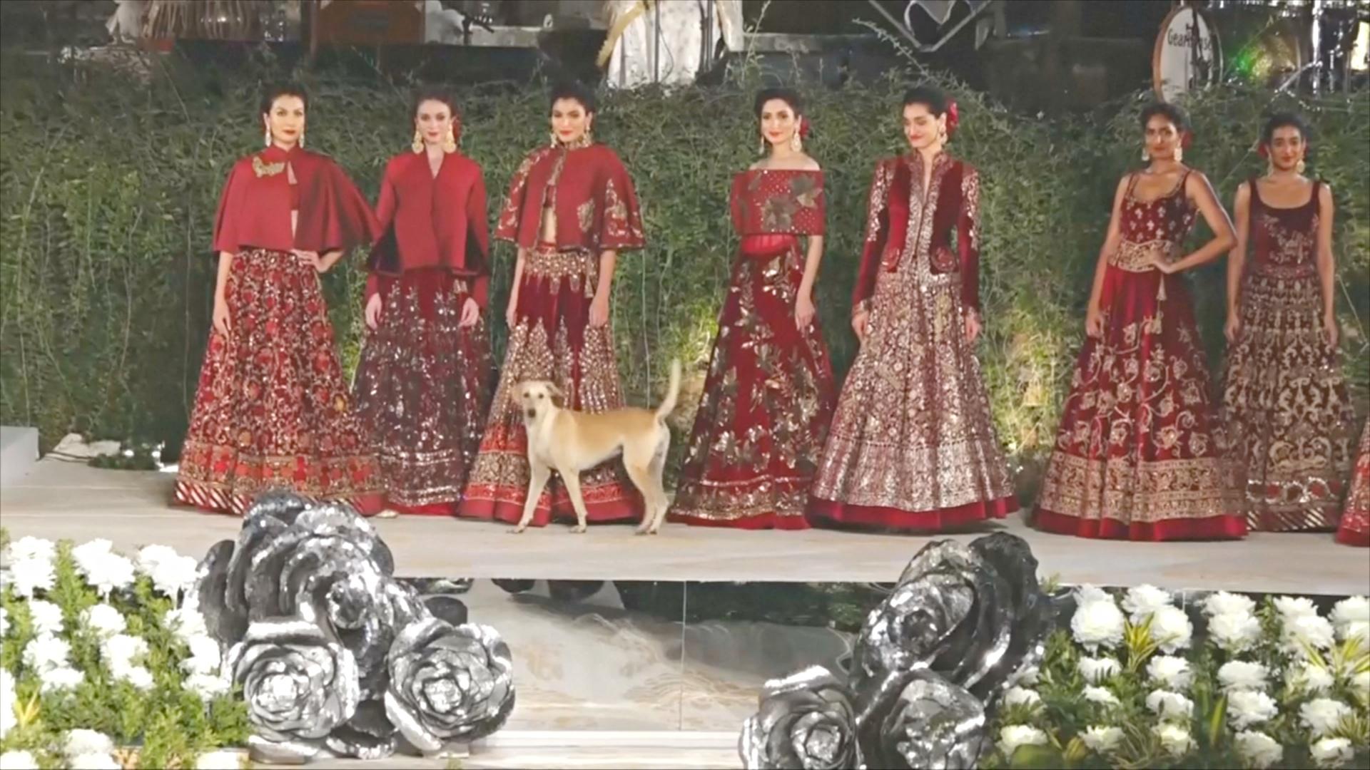 В Индии собака решила затмить моделей и вышла на подиум