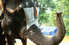 В Индии слониха удивляет игрой на губной гармошке