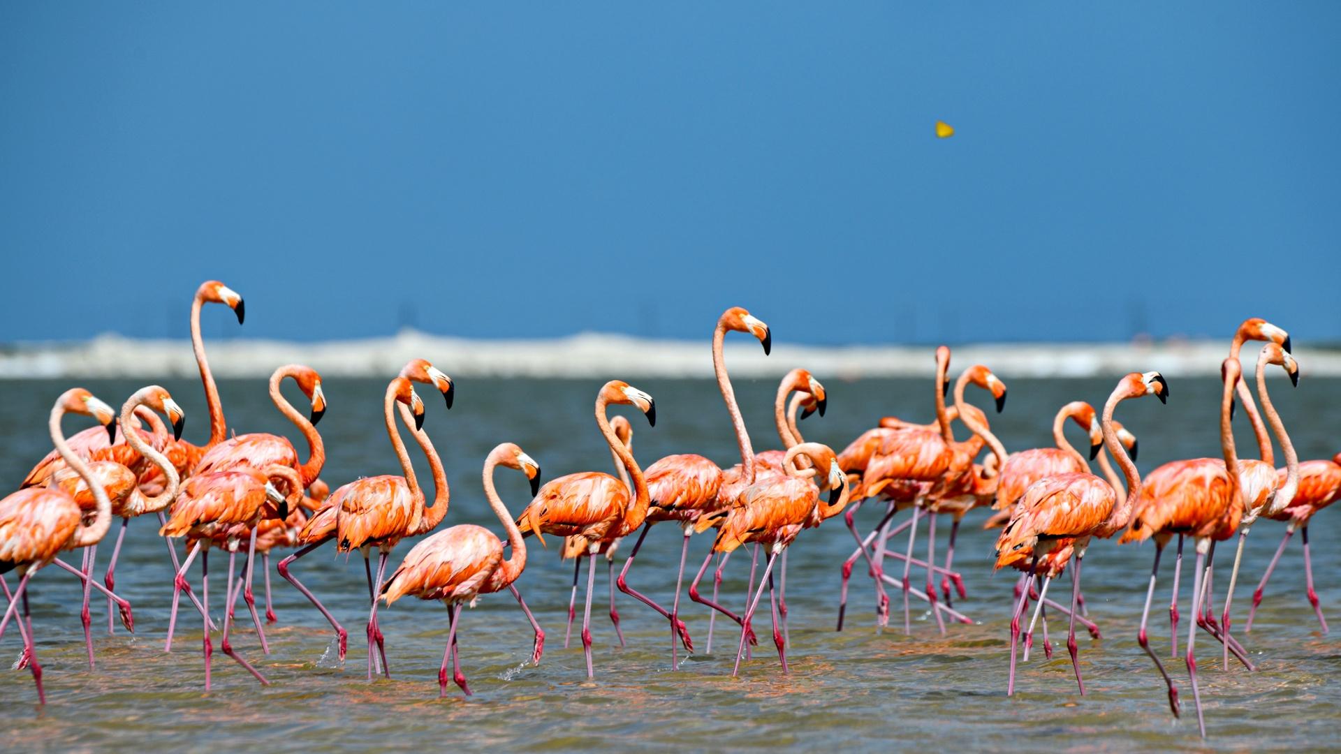 На Кипр прилетели зимовать 5000 фламинго
