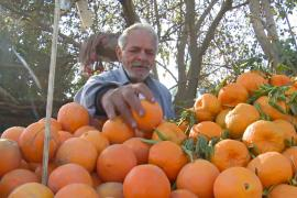 Сбор урожая апельсинов в Египте омрачило падение цен на цитрусовые