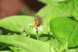 В Кении защищают пчёл ради безопасности пищевой цепи