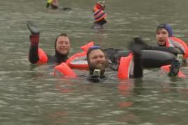 Почти 2000 человек поучаствовали в заплыве по зимнему Дунаю