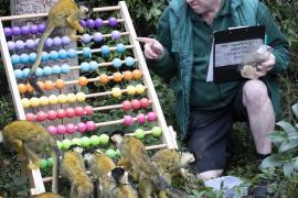 Как в Лондонском зоопарке пересчитывают зверей
