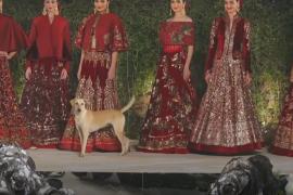 Собака прогулялась по подиуму по время модного показа