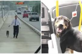 Водитель остановил автобус ради собаки