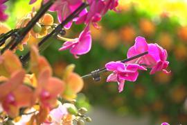 Тысячи колумбийских орхидей привезли на фестиваль в Сады Кью