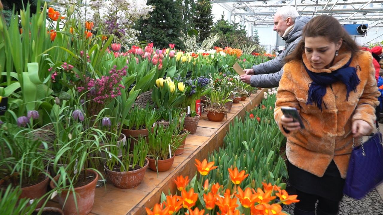 Репетиция весны: тысячи первоцветов распустились в Аптекарском огороде