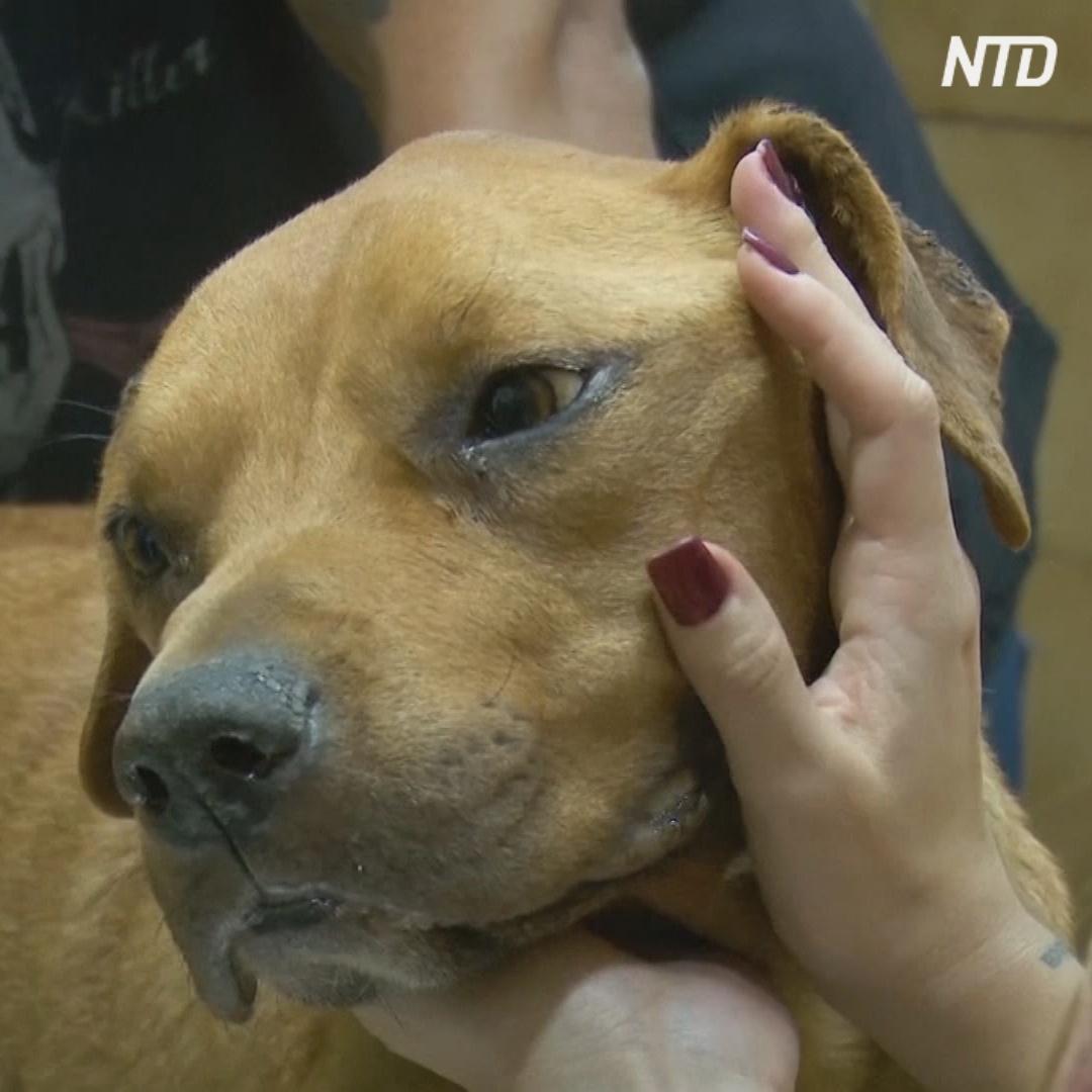 В Аргентине донорами крови могут стать собаки