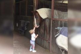 Двухлетняя девочка играет с лошадьми