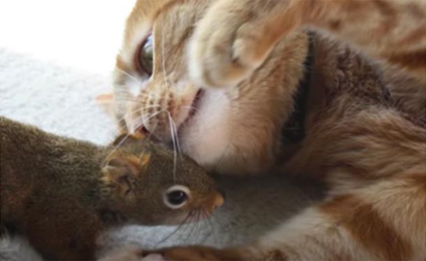 Могут ли дружить белка и кот?