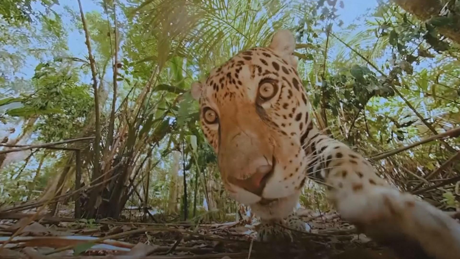 Виртуальная реальность помогает парижанам знакомиться с дикими животными