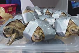В Гонконге процветает нелегальная торговля дикими животными