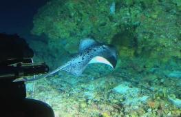 Учёные завершили первый этап исследования Индийского океана