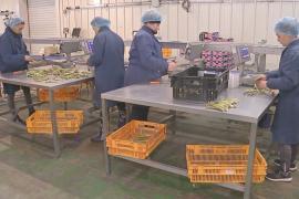 Британским фермам не хватает рабочих