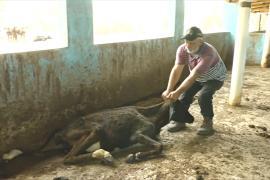 Фермеры Доминиканской Республики пытаются выжить в условиях сильнейшей засухи