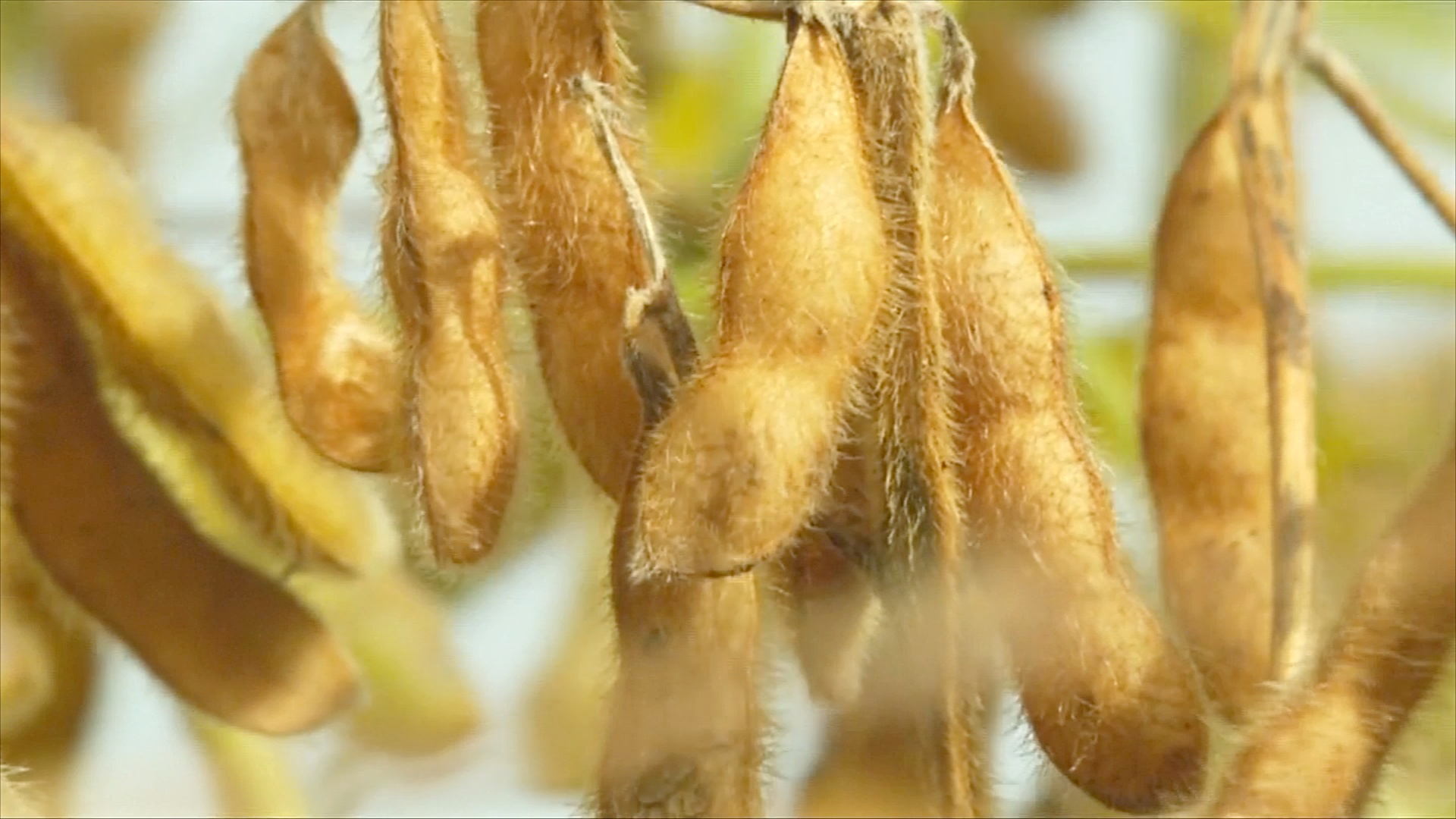 Аргентинские производители сои не спешат продавать урожай и ждут новостей от США и Китая