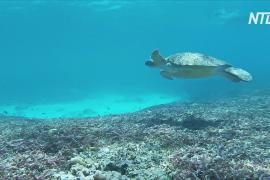 Атолл Альдабра – эталон коралловых рифов мира