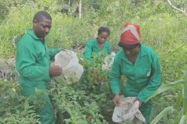 Камерун предлагает деньги и обучение фермерам-новичкам