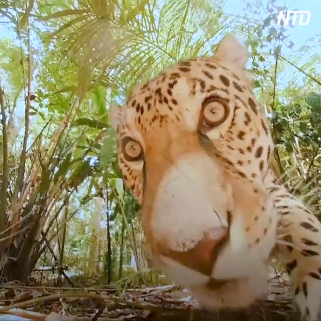 С дикими животными знакомят в виртуальной реальности