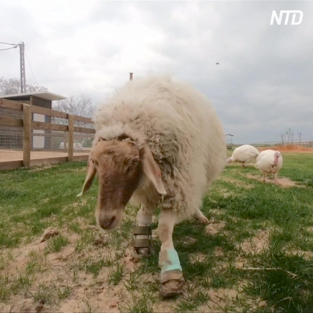 Ферма для домашних животных-инвалидов работает в Израиле