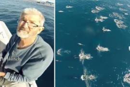 Жизнь китов и дельфинов с высоты птичьего полёта: видео