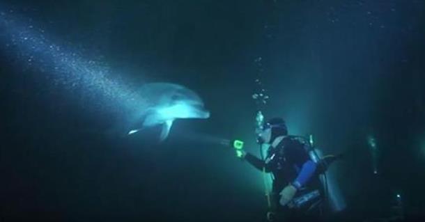 Дельфин попросил дайвера о помощи