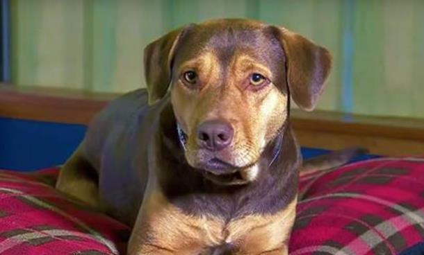 Как бездомная собака стала звездой Голливуда