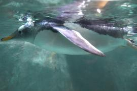 Парад пингвинов открыл летний сезон в Московском зоопарке